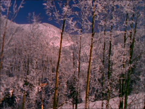 ski lift point of view of snowy pine trees on mountainside - ski lift point of view stock videos & royalty-free footage