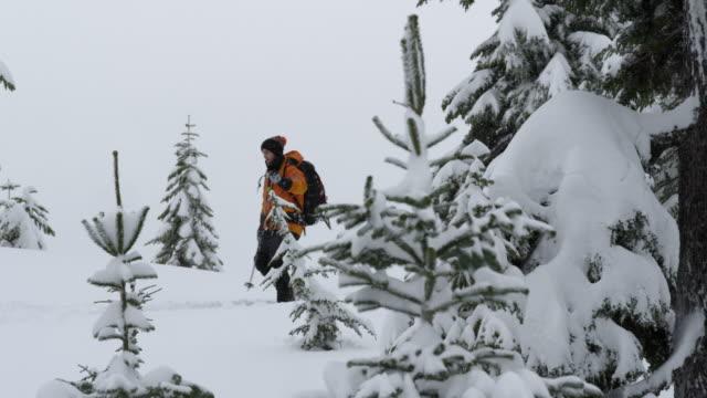 ms ts skier ski touring through trees / squamish, bc, canada - ski clothing stock videos and b-roll footage