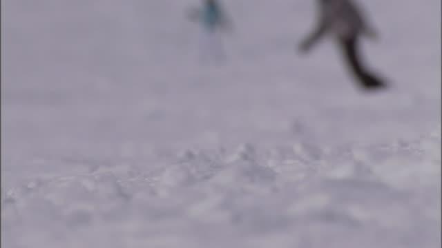 skiers ski down a snowy hillside. - ski holiday stock videos & royalty-free footage