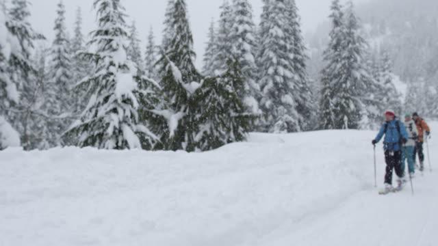 ms pov slo mo skiers ski touring through trees / squamish, bc, canada - squamish stock videos & royalty-free footage