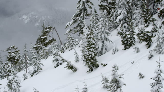 ms ts skiers skiing through trees / squamish, bc, canada - squamish stock videos & royalty-free footage