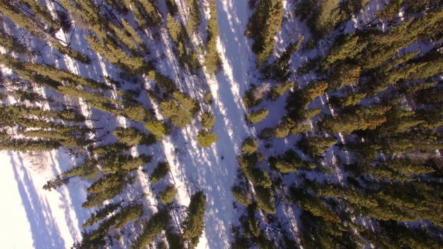 skiing through the forest - runaway stock videos & royalty-free footage