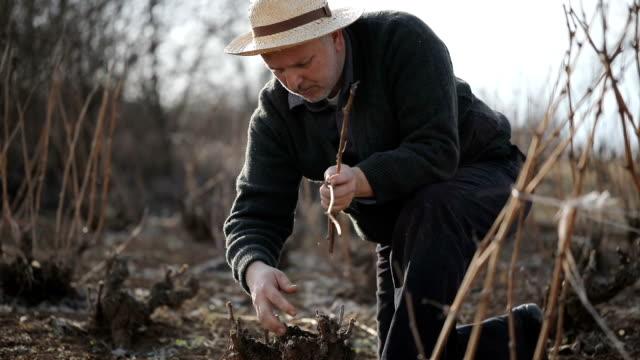 skickliga trädgårdsmästare trimma grenarna tidigt på våren - beskära bildbanksvideor och videomaterial från bakom kulisserna