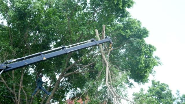 vídeos de stock, filmes e b-roll de homem hábil corte grande árvore, guindaste motor - tesoura