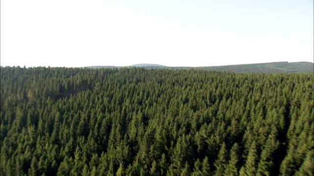 skimming the tree tops  - aerial view - thuringia,  germany - turingia video stock e b–roll