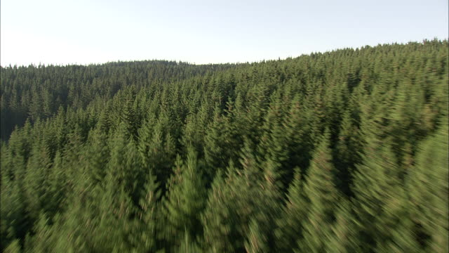 Skimming The Tree Tops