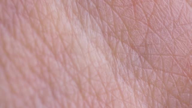 skin macro - skin feature stock videos & royalty-free footage