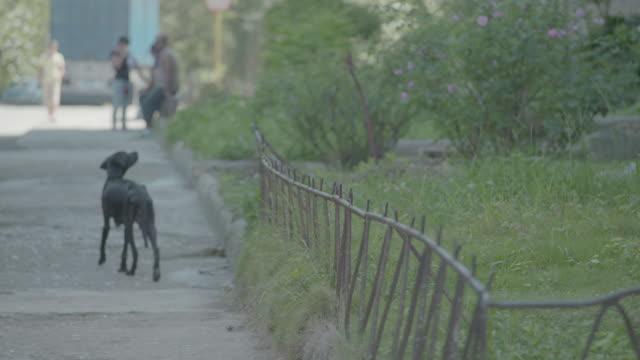 skinny black dog walks down sidewalk - stray animal stock videos & royalty-free footage