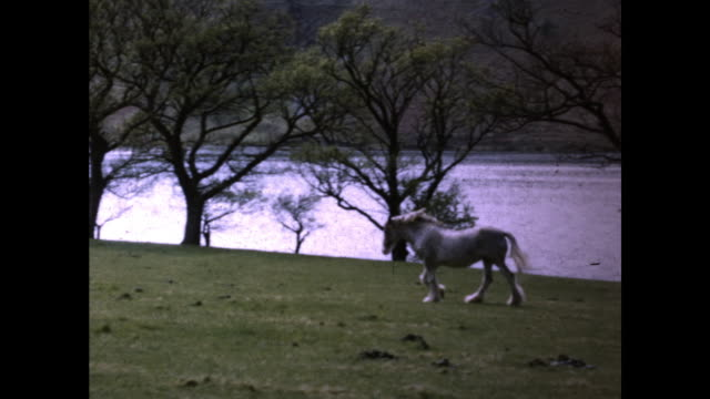 skinny white horse grazing on the grass field next to the river trees by the riverbank - grazing stock videos & royalty-free footage