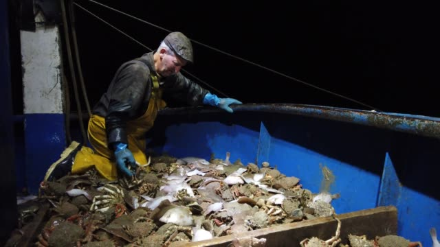 skipper stuart hamilton, works through a catch while fishing for flatfish such as skate and dover sole in the english channel from a hastings fishing... - fishing stock videos & royalty-free footage