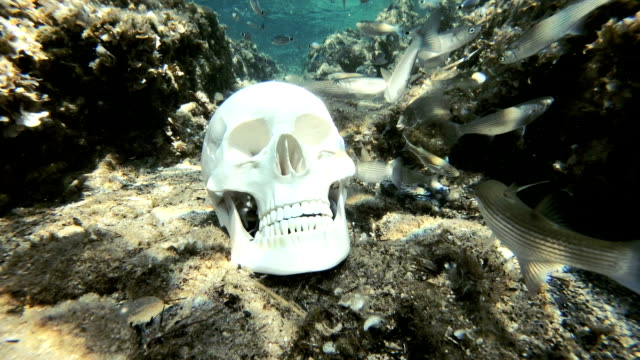 skull at sea bottom surrounded by fish - bone stock videos & royalty-free footage