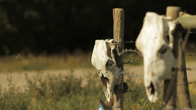 skull of a cow on a fence - skull stock videos and b-roll footage