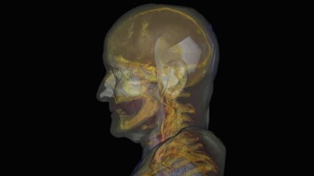 skull of elderly man - biomedicinsk illustration bildbanksvideor och videomaterial från bakom kulisserna