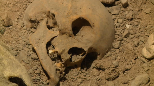 skull remains in the dirt - human bone stock videos & royalty-free footage