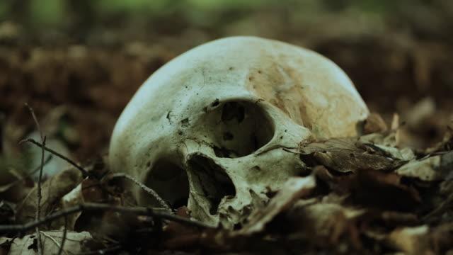 頭蓋骨 - 骨点の映像素材/bロール