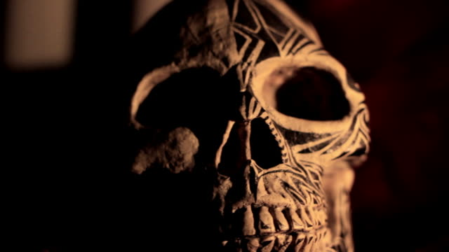 skull - animal skeleton stock videos & royalty-free footage