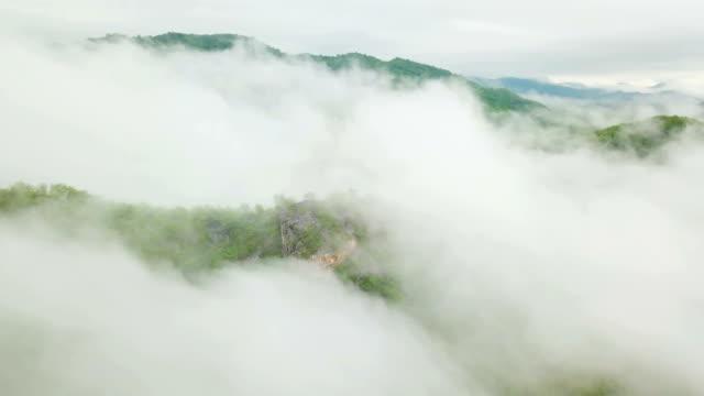 himmel und nebel am berg in thailand - tropischer baum stock-videos und b-roll-filmmaterial