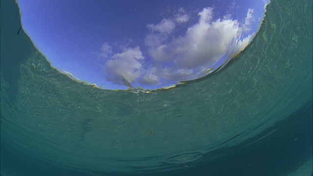 slo mo cu la sky and seagull seen through rippled in water / moorea, tahiti, french polynesia - moorea stock videos and b-roll footage