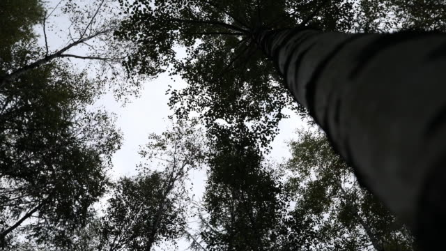 sky and tree / italy - low angle view video stock e b–roll