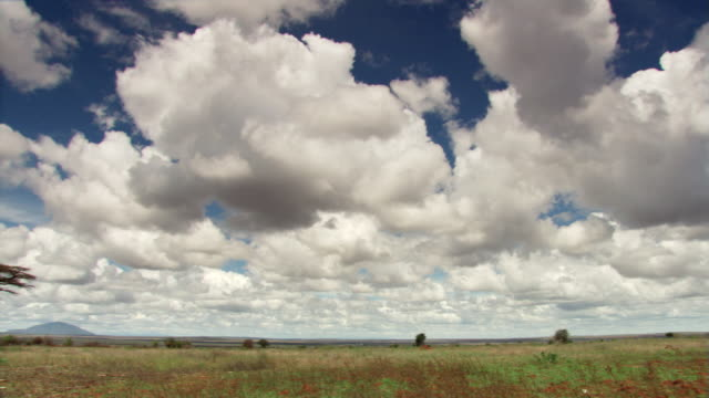 sky over savanna - artbeats stock videos & royalty-free footage