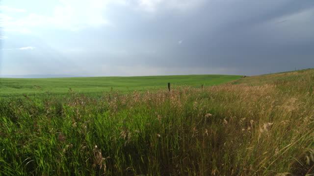 vídeos y material grabado en eventos de stock de sky over wide field of blowing grass - wiese