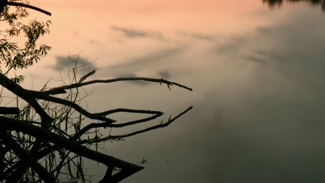 sky reflection at water surface - branch stock videos & royalty-free footage