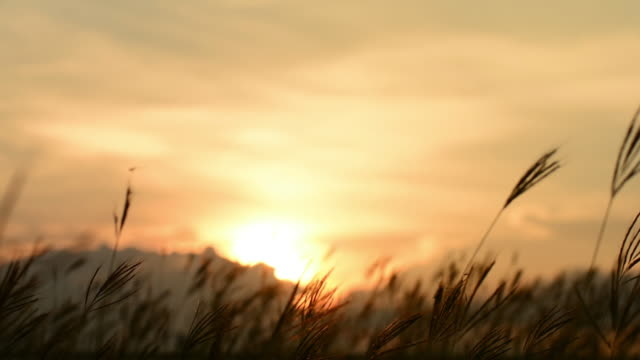 sky, sunset, reeds swaying in the breeze. - bedtime stock videos & royalty-free footage