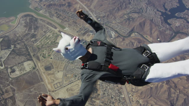 vídeos de stock e filmes b-roll de skydiving in llama mask - esquisito