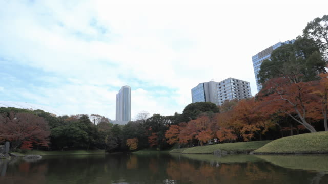 skyscraper and blue sky with building and beautiful colorful autumn maple leaves in forest at tokyo - moat stock videos & royalty-free footage