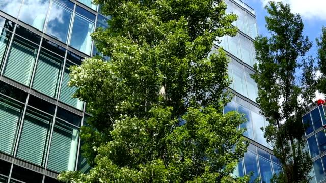 Hochhaus mit Baum, Panning
