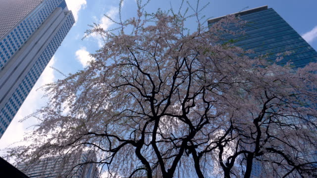 skyscrapers with cherry blossoms - 広場点の映像素材/bロール