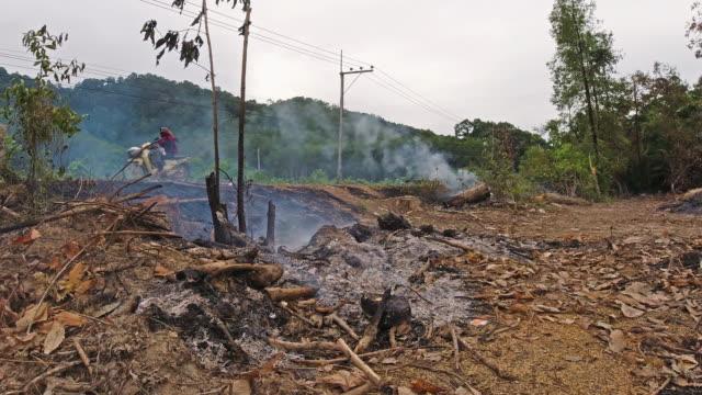 vidéos et rushes de slash and burn deforestation of tropical forest - ruiné