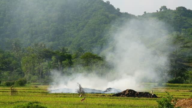 vídeos de stock, filmes e b-roll de queimada campo de arroz na ásia - 2015