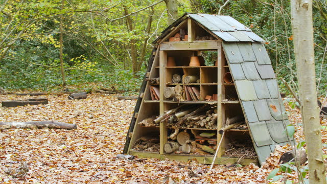 slate-covered storage unit in autumn woodland - forestry industry stock videos & royalty-free footage