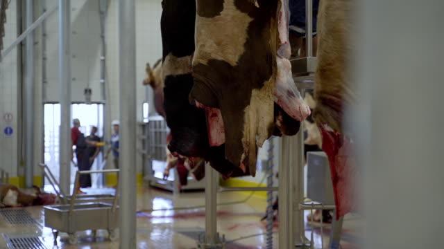 slaughterhouse - slaughterhouse stock videos & royalty-free footage