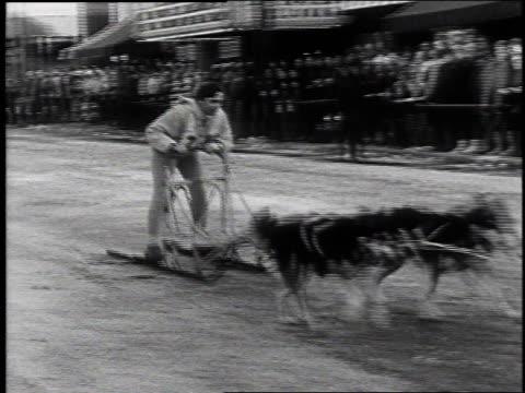 1968 ms sled dog racing / laconia, new hampshire, united states - richard nixon stock-videos und b-roll-filmmaterial