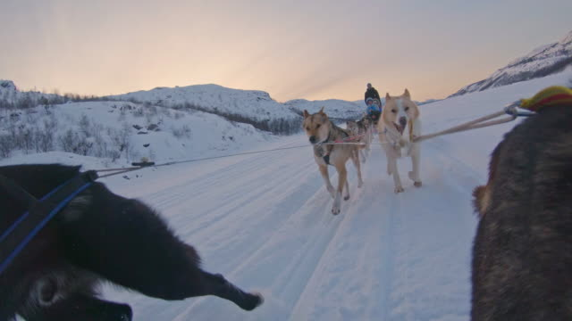 slo mo ws sled dogs pulling a sled - norway stock videos & royalty-free footage