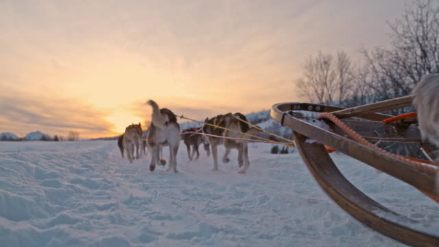SLO MO Sled dogs racing across the snow at sunset