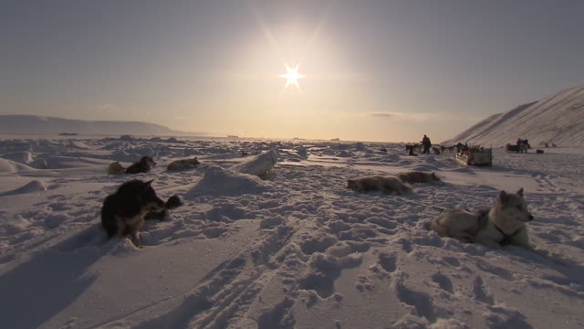 sled dogs rest in a snowy landscape in greenland.  - resting stock videos & royalty-free footage