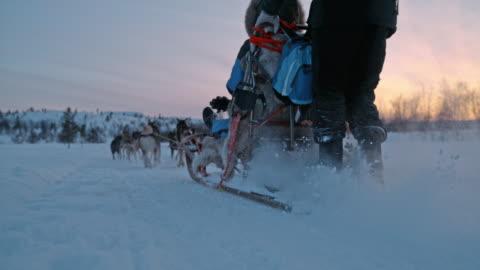 vidéos et rushes de slo mo chiens courir à travers la neige au lever du soleil - chien de traîneau
