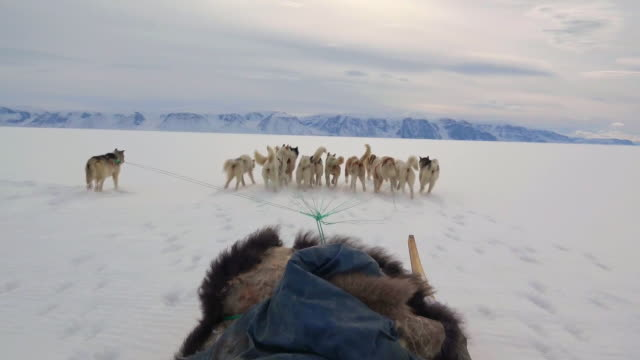 sled dogs running on snow in greenland - north pole stock videos & royalty-free footage