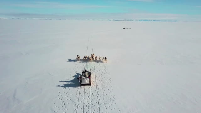Sled dogs running on snow in Greenland