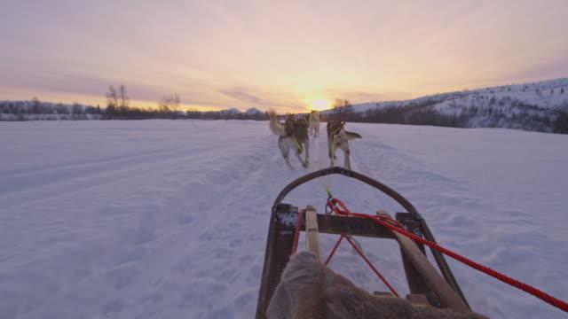 vidéos et rushes de pov traîneau tiré par des chiens de traîneau - chien de traîneau