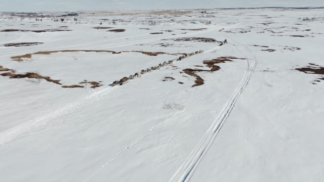 sled with a herd of reindeer running on the snow field in yamal peninsula / siberia, russia - herding stock videos & royalty-free footage