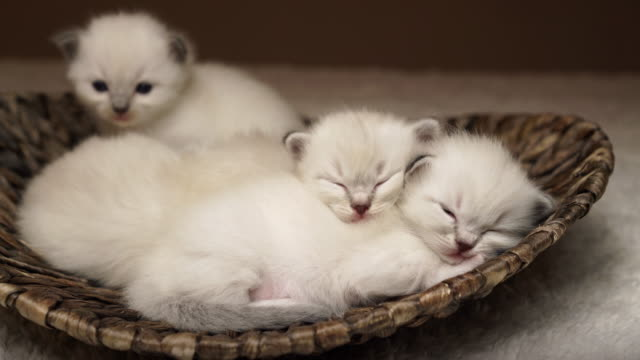 sleeping baby cats - 20 seconds or greater stock videos & royalty-free footage