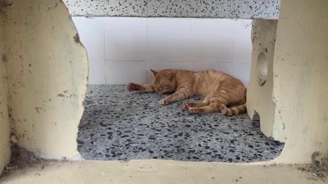 眠り猫 - 雑種のネコ点の映像素材/bロール