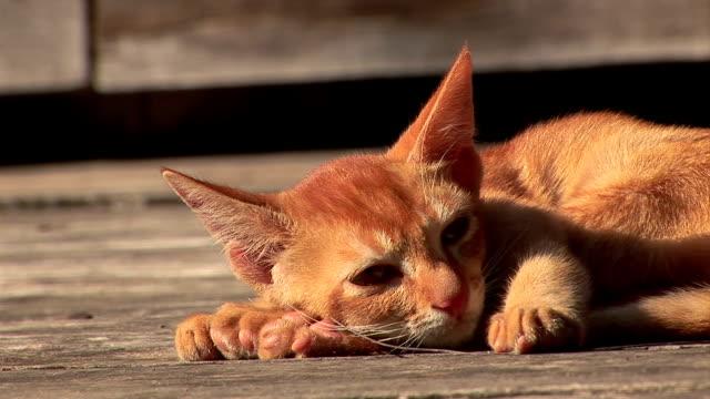 Schlafen cat