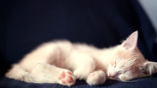 sleeping cat - sleeping stock videos & royalty-free footage
