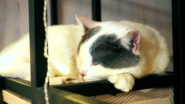 寝室の猫 - 雑種のネコ点の映像素材/bロール