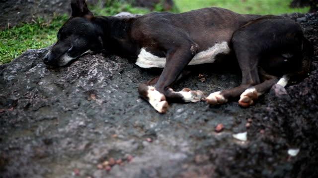 犬用ベッド - 動物の脚点の映像素材/bロール